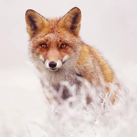 Roeselien Raimond - Fairytale Fox Series - The Elusive Dog Fox