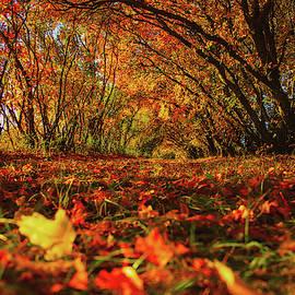 Fall by Aaron J Groen