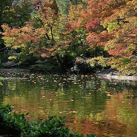 Fall At The Japanese Garden by Ricardo J Ruiz de Porras