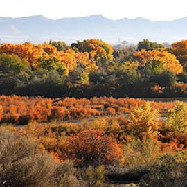 Fall Color Along Colorado River Near Fruita by Ray Mathis