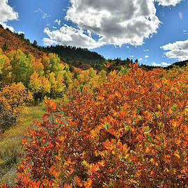 Fall Colors Along County Road 5 Near Ridgway Colorado by Ray Mathis