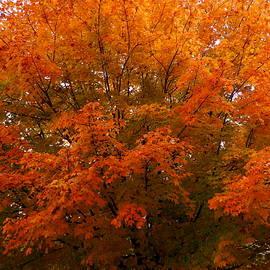 Fall Colors in Virginia by Arlane Crump