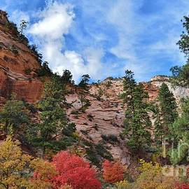 Fall Colors In Zion by Janet Marie