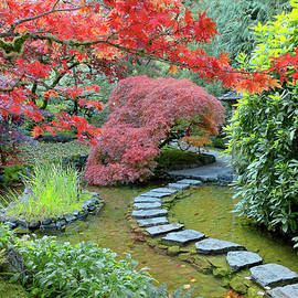 Fall Colour, The Japanese Garden by Michael Wheatley