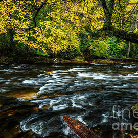 Fall Day On Cranberry River by Thomas R Fletcher