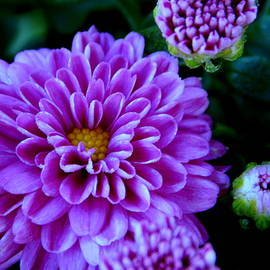 Fall Flower Series - 11 by Arlane Crump