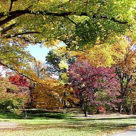 Fall Foliage at the Arnold Arboretum by Lyuba Filatova