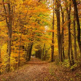 Fall foliage in Jacobsburg, Pa by Suguna Ganeshan