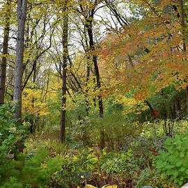 Fall Forest by Cheryle Gannaway