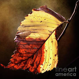 Fall Leaf by Pam  Holdsworth