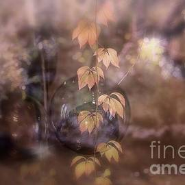 Fall Magic by Mary Lou Chmura