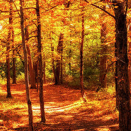 Fall On The Trail by Denise Harty