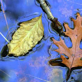 Fall Pond 3 2018 by Mary Bedy