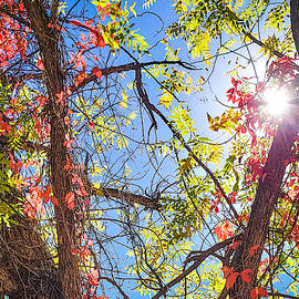 Fall Sky by Bonny Puckett
