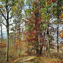 Fall Trail by Lyuba Filatova