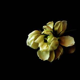 Fallen Bloom by Denise Harty