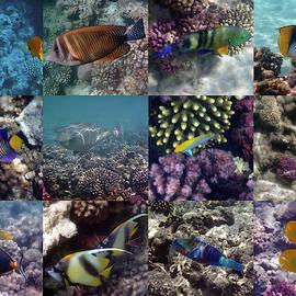 Fantastic Red Sea Underwater Sealife Collage by Johanna Hurmerinta