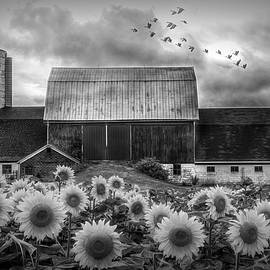 Farmer's Field in Black and White by Debra and Dave Vanderlaan