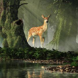 Fawn In The Forest by Daniel Eskridge