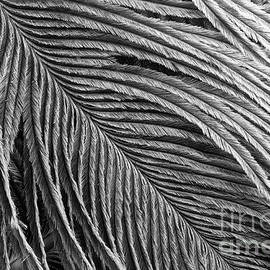 Feather Detail Black And White by Sharon McConnell