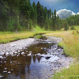 Feeder Stream Near Yellowstone River by R christopher Vest