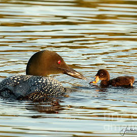 Feeding time by Heather King