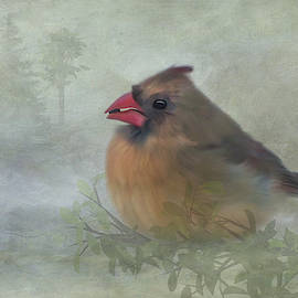 Female Cardinal with Seed by Patti Deters