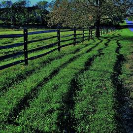 Fence Line Shadows by Suzanne Wilkinson