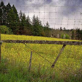 Fenced In Flowers by Jean Noren