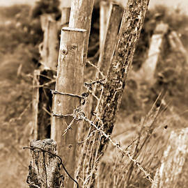 Fenced In by Marcia Colelli