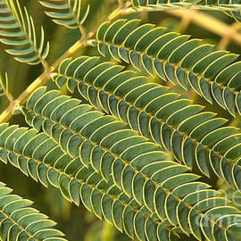 Fern Scales by Joy Watson
