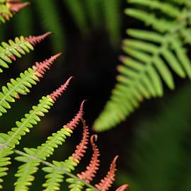 Ferns. Garajonay National Park by Guido Montanes Castillo