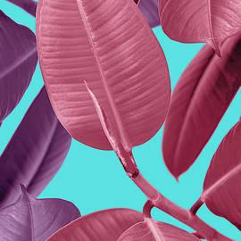 Ficus elastica in pink by Mark Ashkenazi