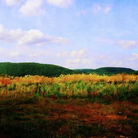 Field of Beauty by Trina Ansel