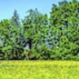 Field of Trees by Pat Turner