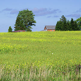 Field of Yellow by Andrew Wilson