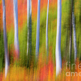 Fiery Fall Abstract by Claudia Cooper