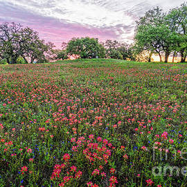 Fiery Sunrise And Wildflowers At Windmill Hill - Old Baylor University Park - Independence Texas by Silvio Ligutti
