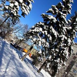 Fir Trees in Snow by Anna Yurasovsky