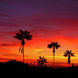 Fire Sunset by Julieanne Case