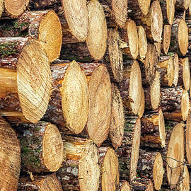 Firewood  by Nick Bywater