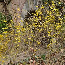 First Forsythia - Central Park in Spring by Miriam Danar
