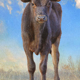 First Year Calf  by R christopher Vest