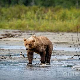 Fishing in Lake Clark National Park II - Bears by Jan Mulherin