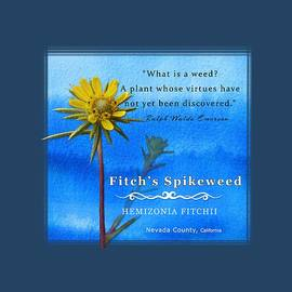 Fitch's Spikeweed by Lisa Redfern