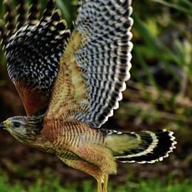 Five Feet From Flying Hawk by William Tasker