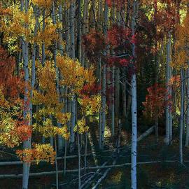 Flames of Autumn by Jim Garrison