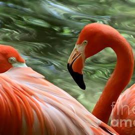 Flamingo Colors by Myrna Bradshaw