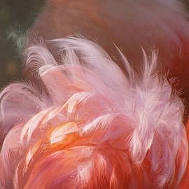 Flamingo Feathers by Terry Davis