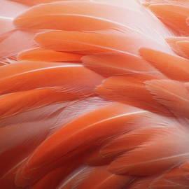 Flamingo by Santa2030